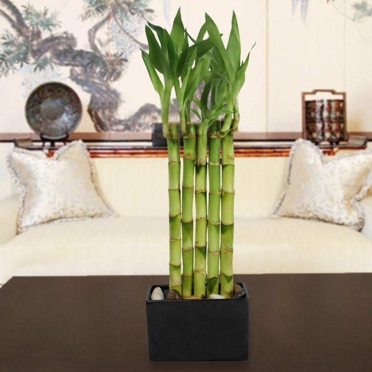 decoración zen bambu