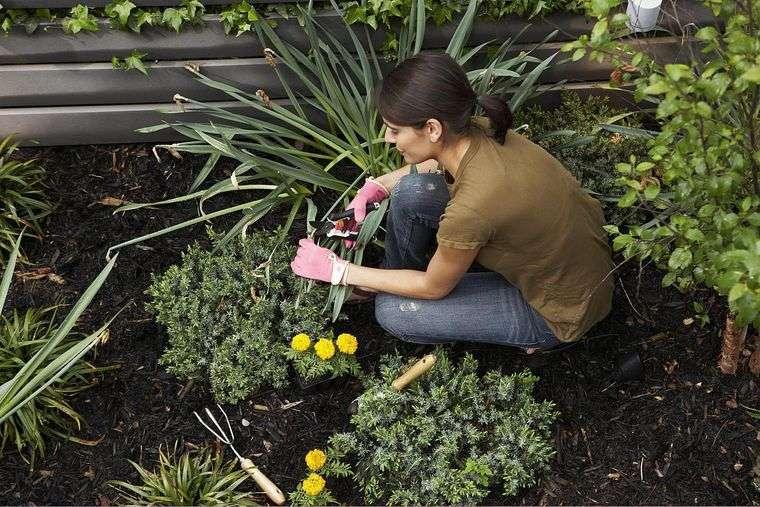el jardín arreglo