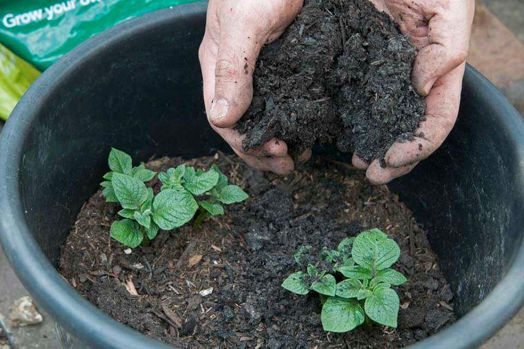 el jardín compost