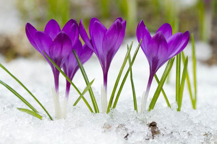el jardín cuidados invierno