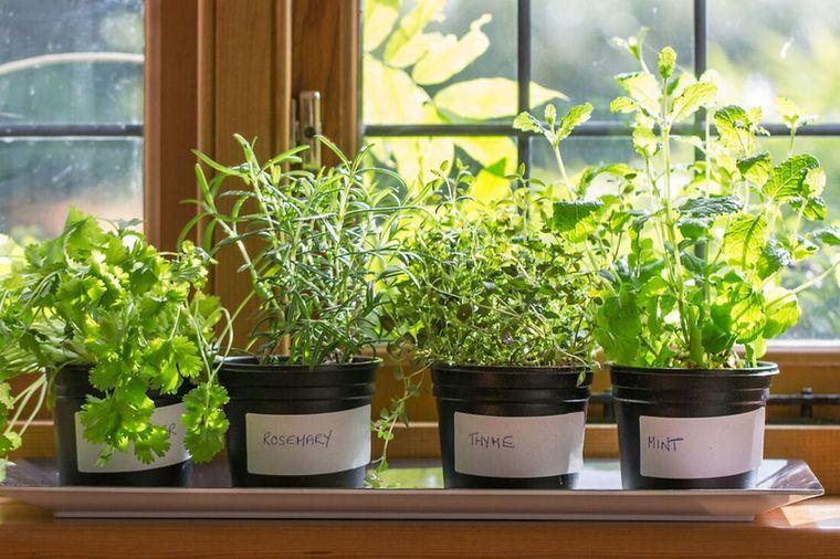 el jardín cultivo interior