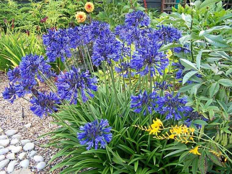 el jardín flores