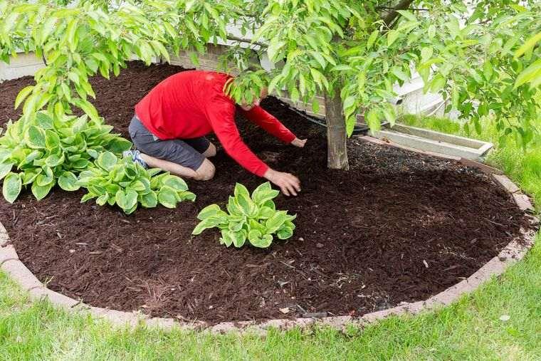 el jardín mantillo