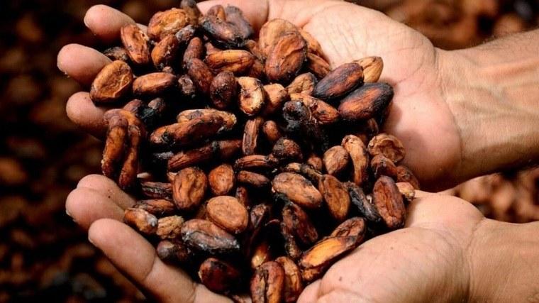 ghana-cacao-vientos-afectan-produccion
