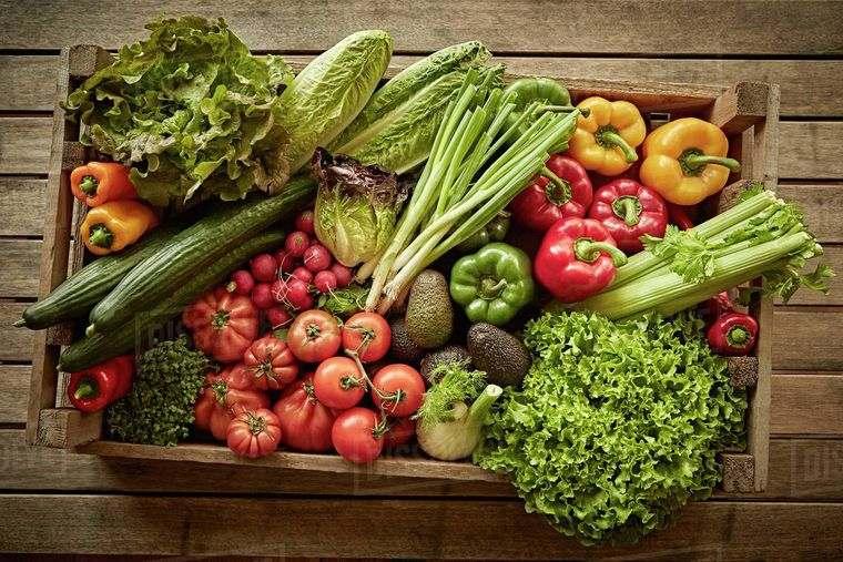 nutrición alimentos