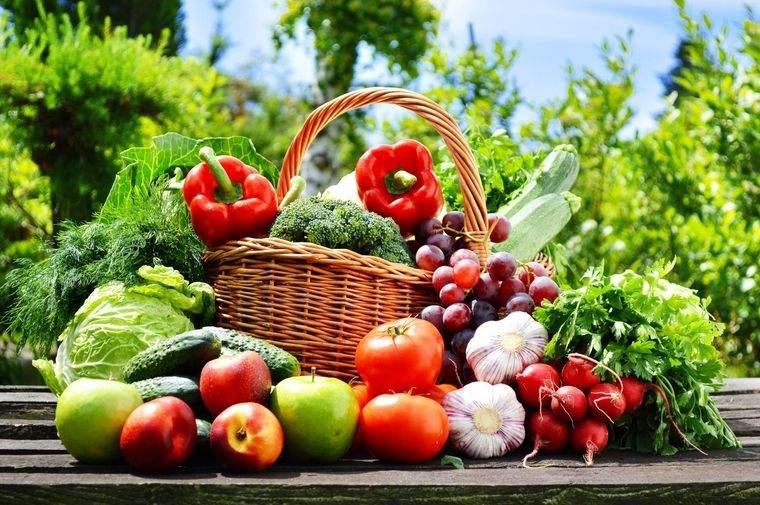 nutrición energia