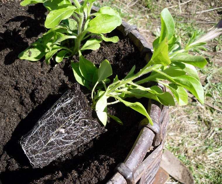 primavera 2020-crear-jardin-bello