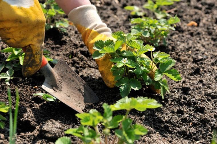 primavera 2020-frutas-jardin
