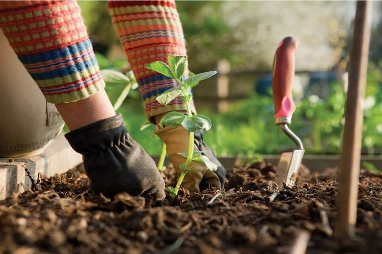primavera-2020-plantas-desinfectar-opciones