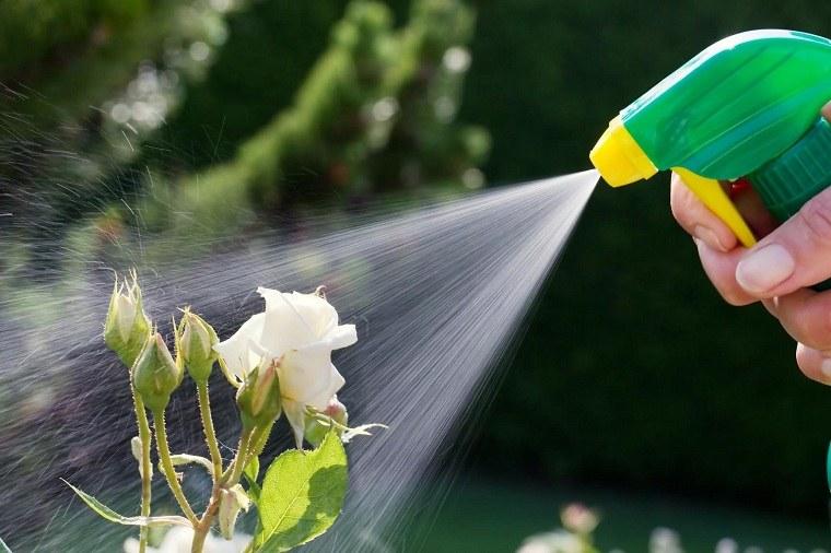 primavera-2020-plantas-desinfectar
