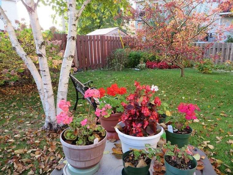 primavera-2020-plantas-ideas-limpiar