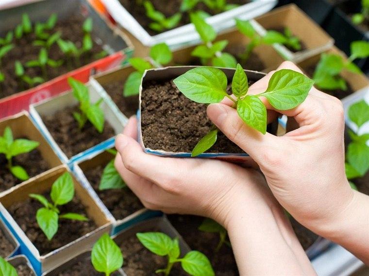 primavera-2020-plantas-jardin