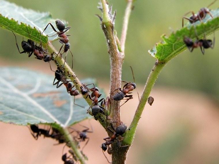 proteger-jardin-plagas-consejos