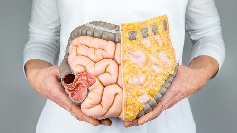 Sistema digestivo-consejos-bienestar