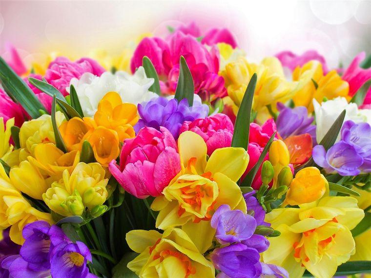 flores de primavera alegria