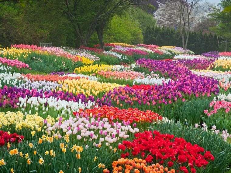 flores de primavera colores