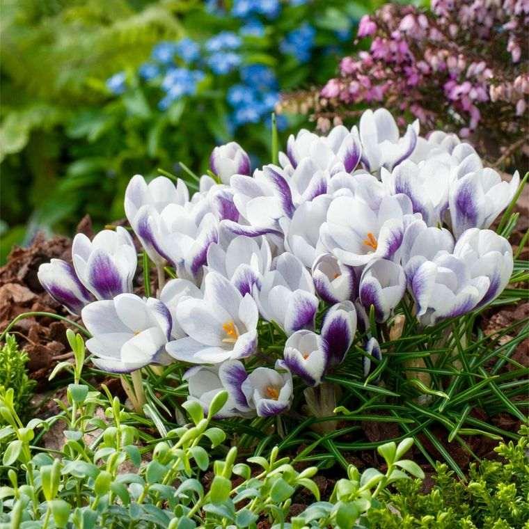 flores de primavera delicadas