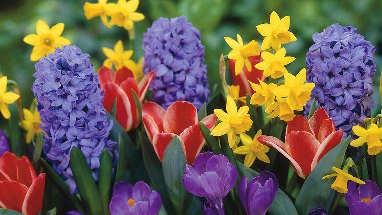 flores de primavera hermosas