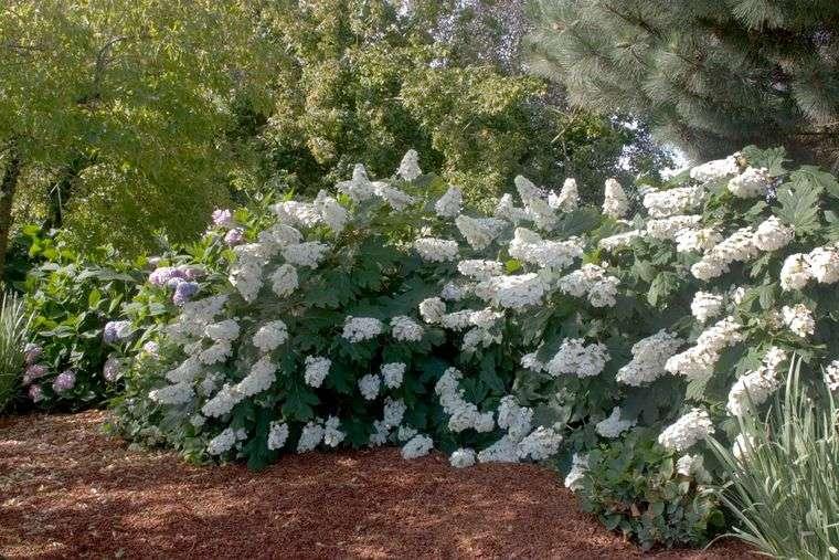 flores de primavera hortencias