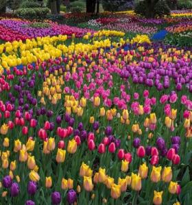 flores de primavera inicio