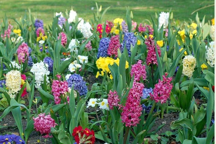 flores de primavera jardin