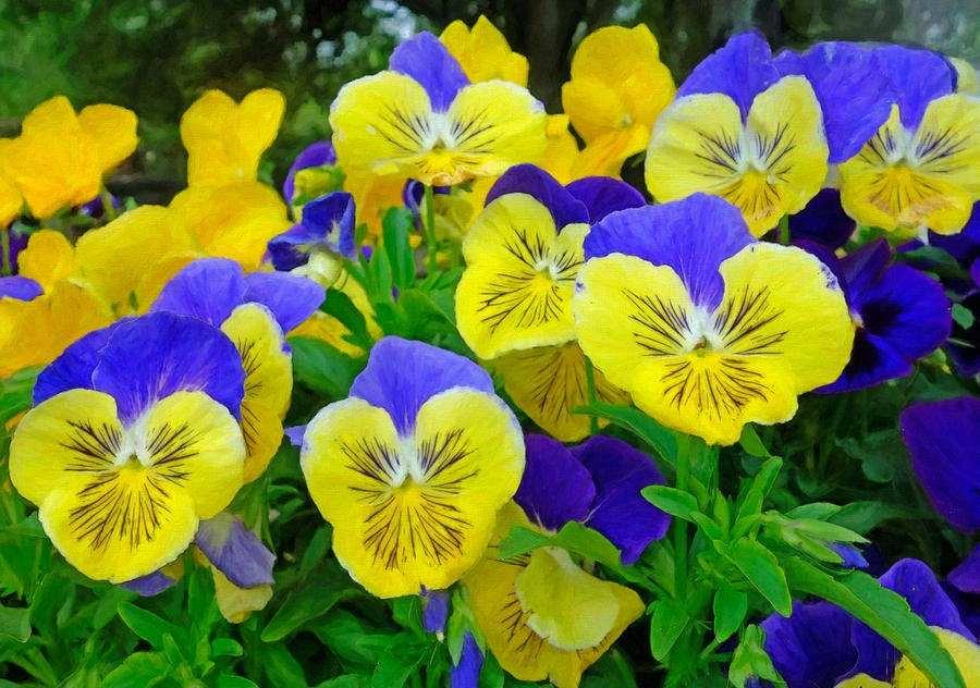 flores de primavera lindos pensamiento