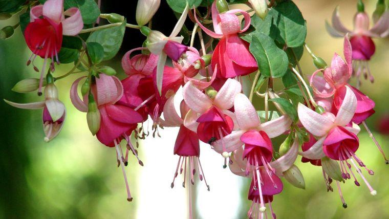 flores de primavera llamativas