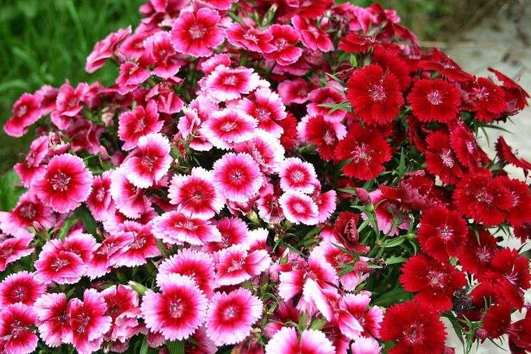 flores de primavera rojas