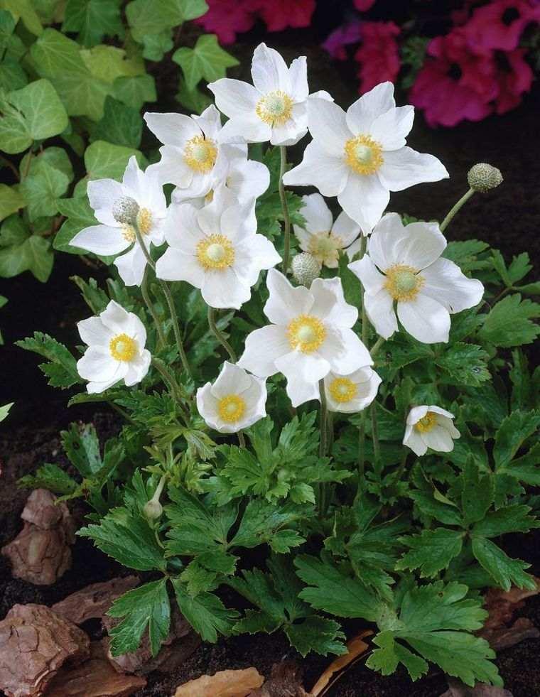 flores de primavera snowdrop