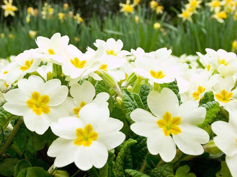 flores de primavera sutiles