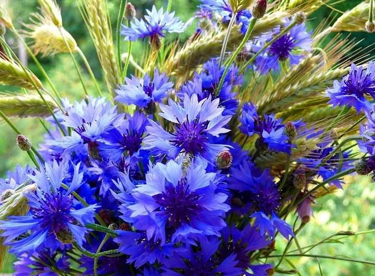 flores-perennes-ideas-plantas