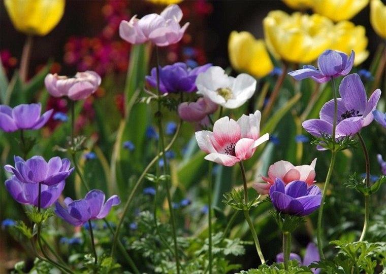 flores-perennes-jardin-anemona