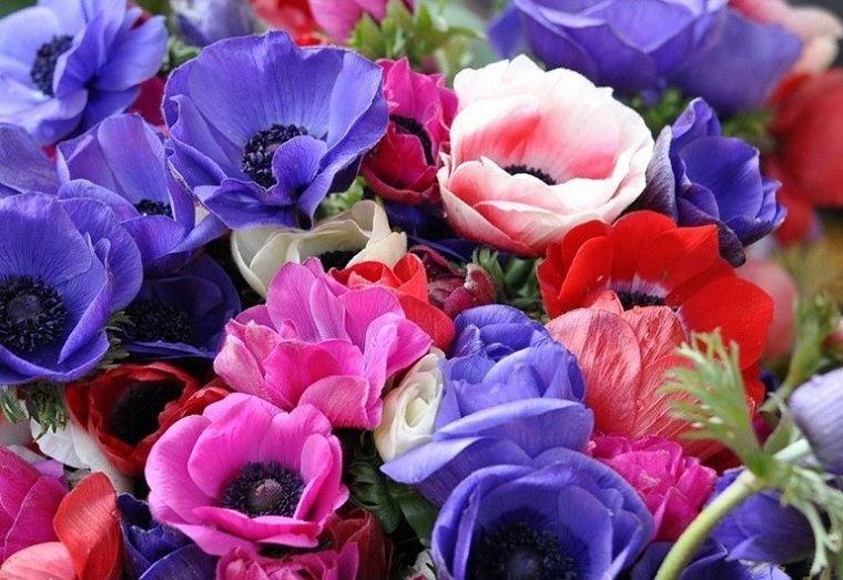 flores-perennes-jardin-anemona-jardin