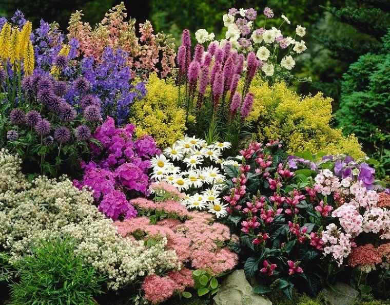 Flores perennes jardin-belleza