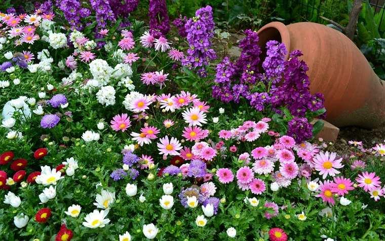 flores-perennes-jardin-ideas-color
