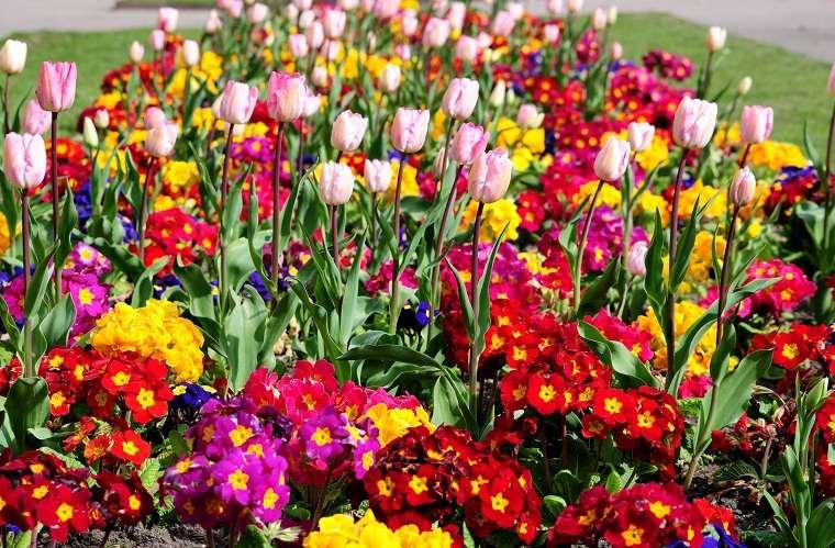flores-perennes-jardin-ideas-primavera