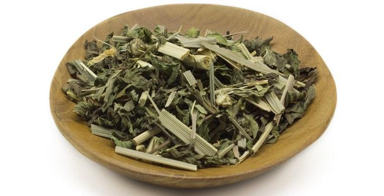 hierbas especias echinacea