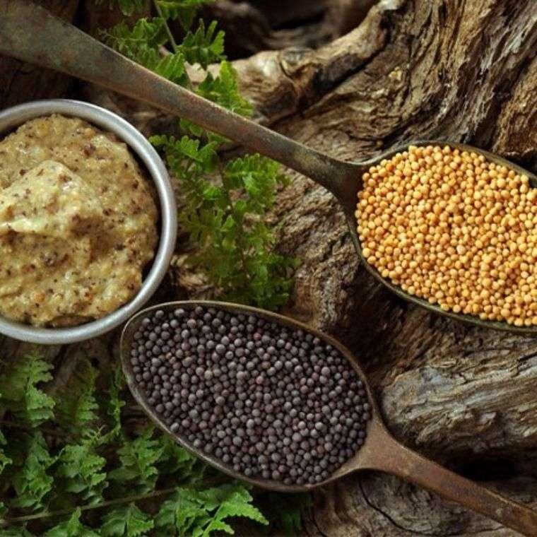 hierbas semillas mostaza