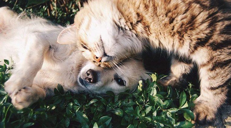 mascotas-coronavirus-infeccion-noticias