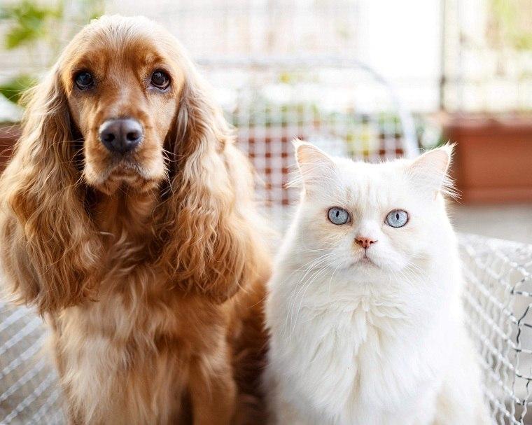mascotas-coronavirus-infeccion