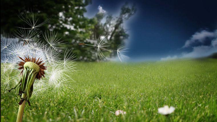 alergia al polen condicion comun