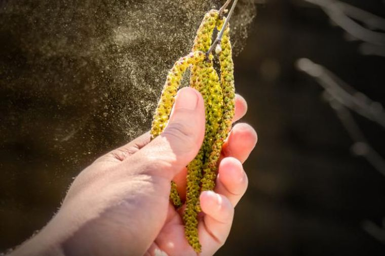 alergia al polen se incrementa
