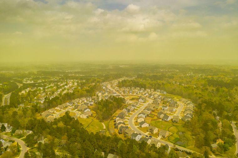 alergia al polen vista aerea