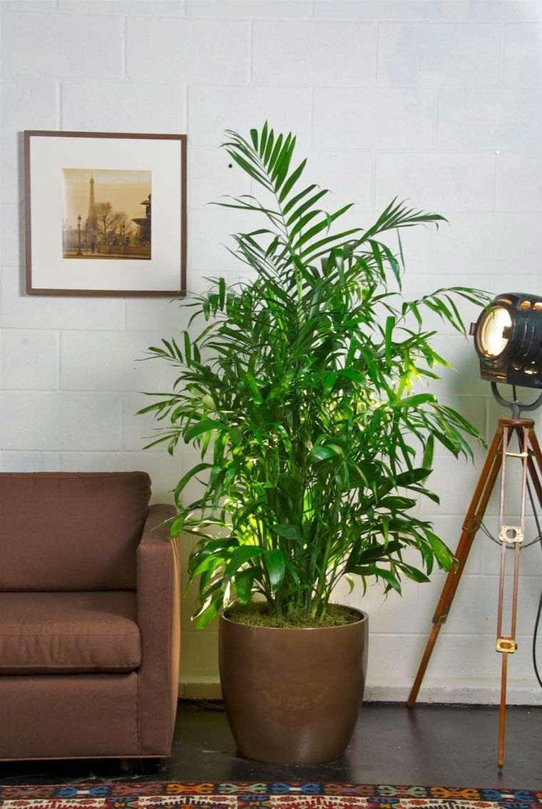 air purifying plants bambus