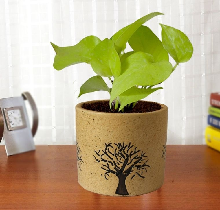 air purifying plants money