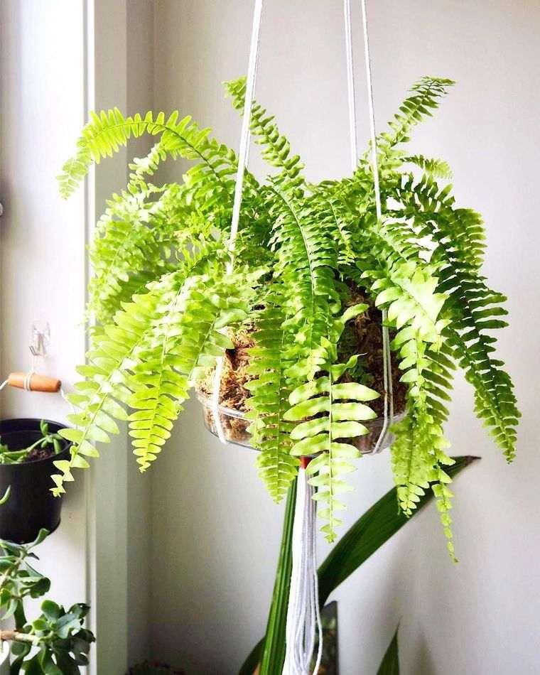 fern air purifying plants