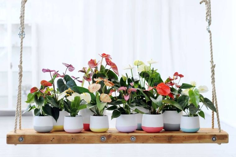home air purifying plants