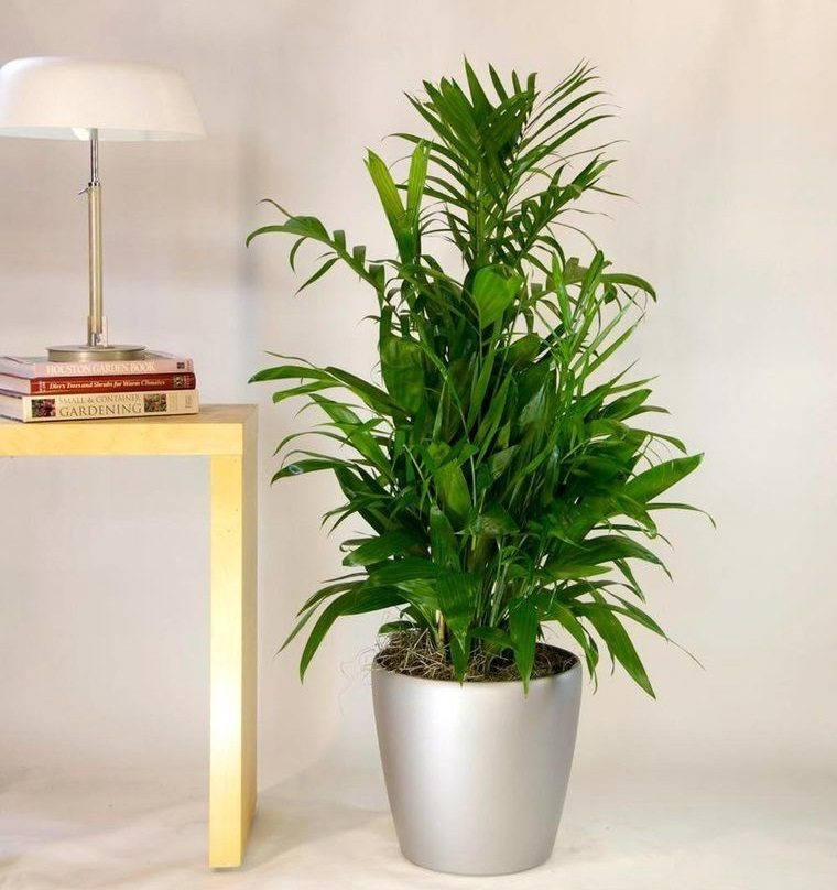 indoor air purifying plants bamboo