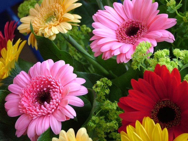 air purifying plants health