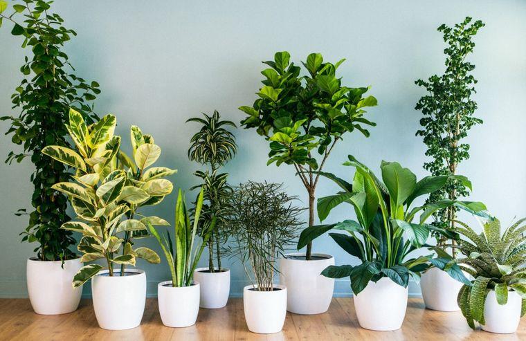 plantas purificadoras de aire variedad